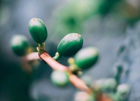 Cultivado con Respeto