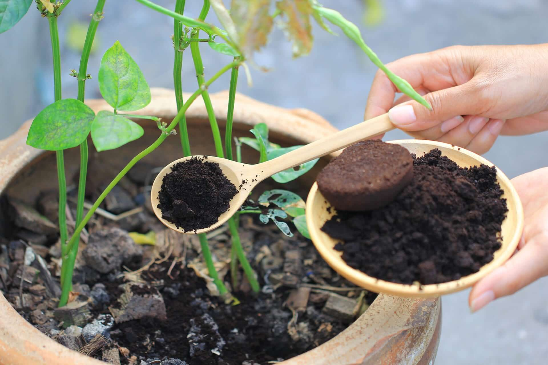 posos de cafe para plantas