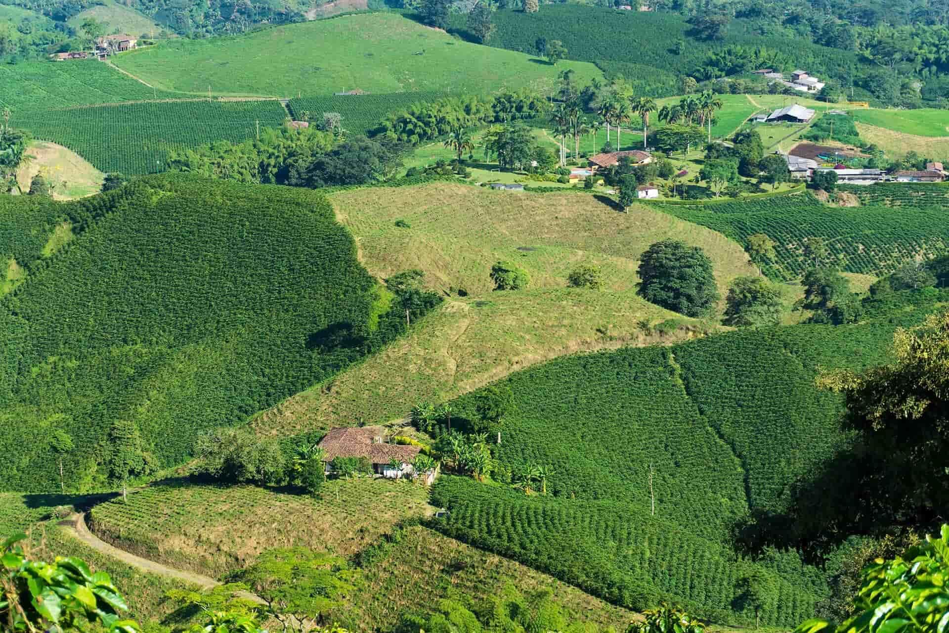 campos de cafe