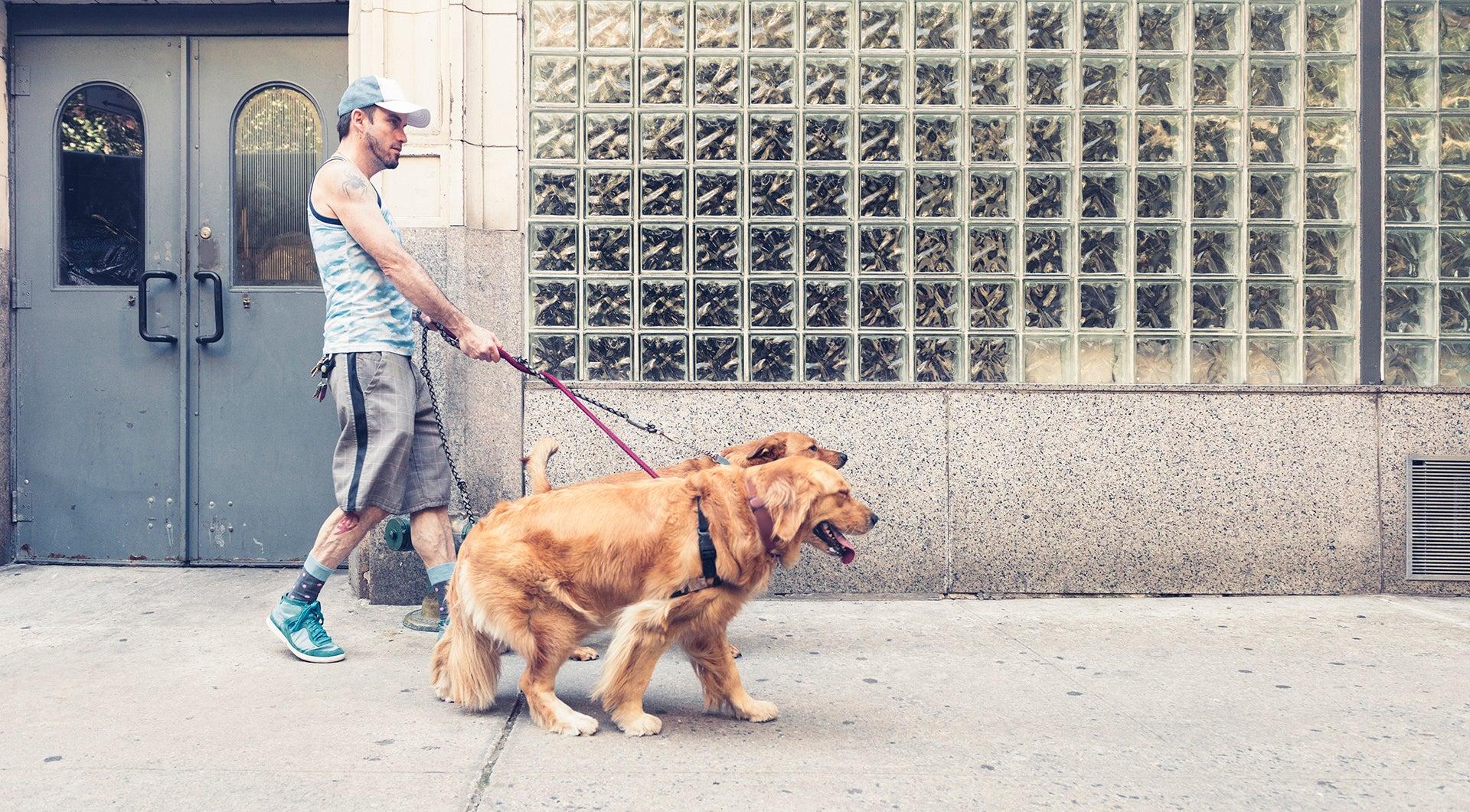pasear perros
