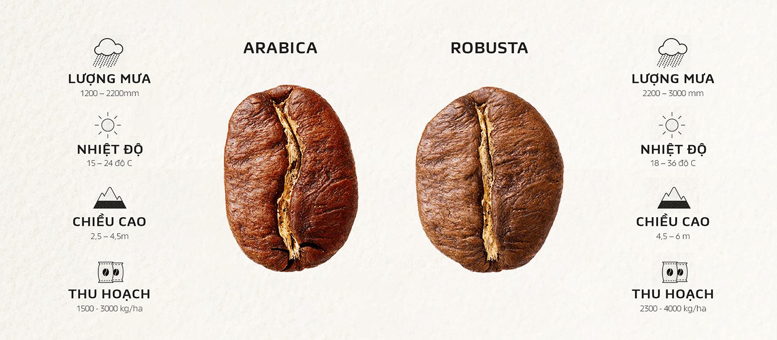 Arabica with Robusta