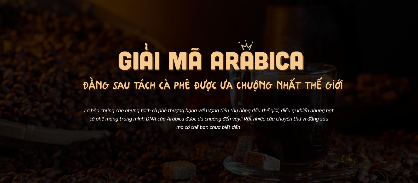Giải mã hạt cà phê Arabica